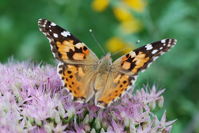 zahrada a motýl