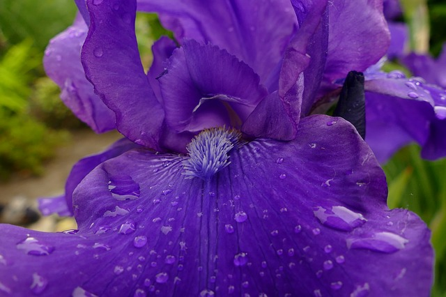 detail květu